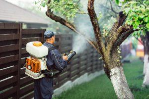 Plagas más habituales en edificios de vecinos